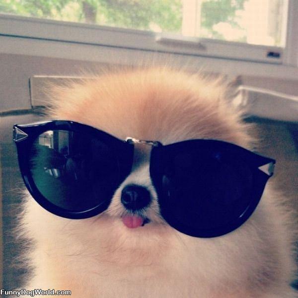 Giant Sunglasses