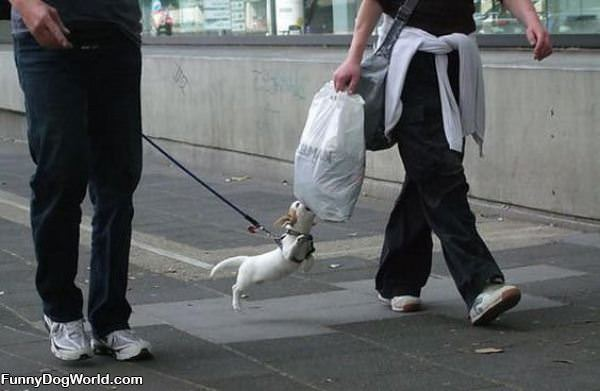 Gimme That Bag