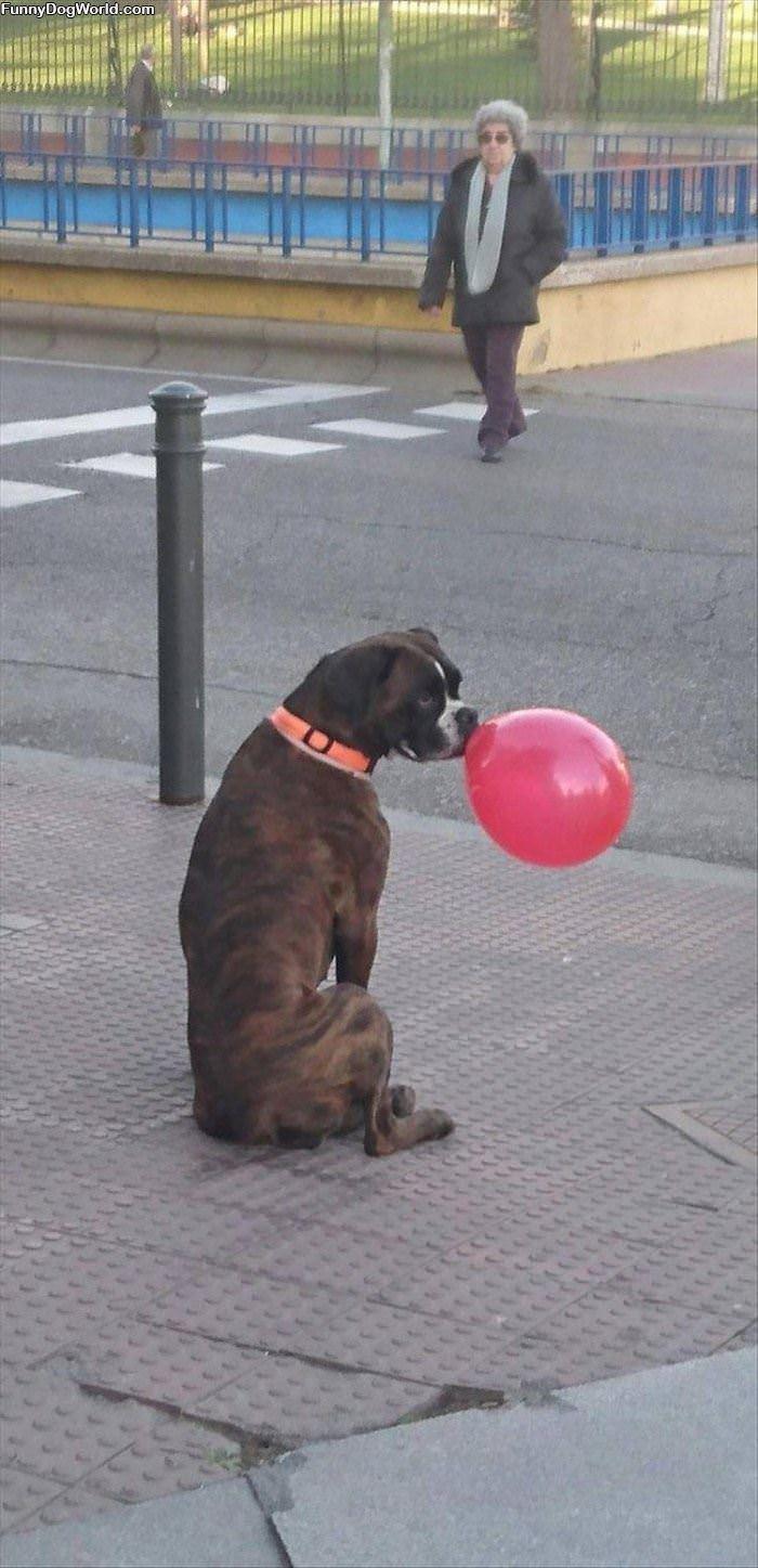 Got A Balloon