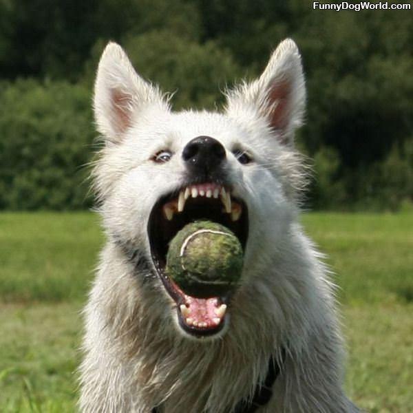 Got Me A Ball