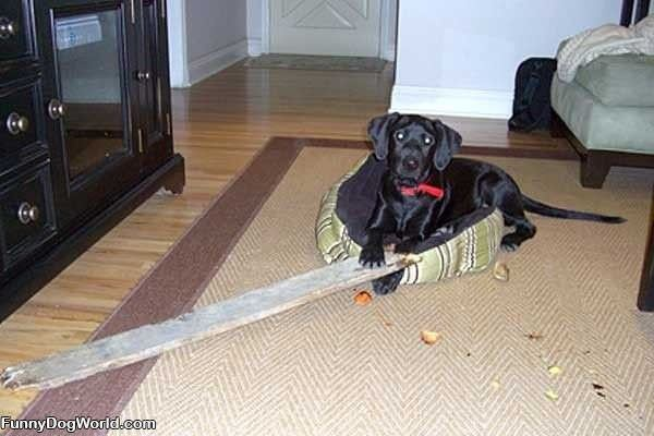 Got My Stick
