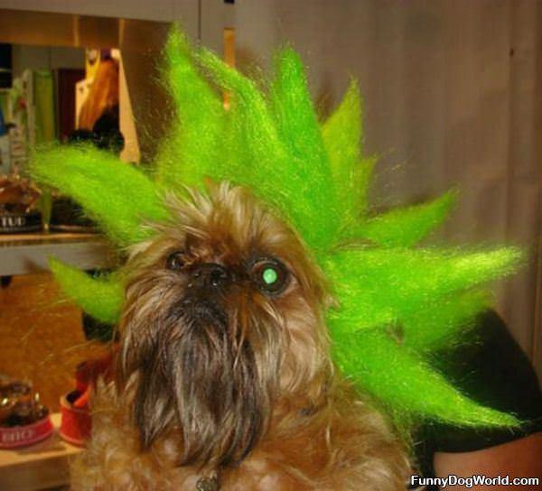 Green Hair Dog