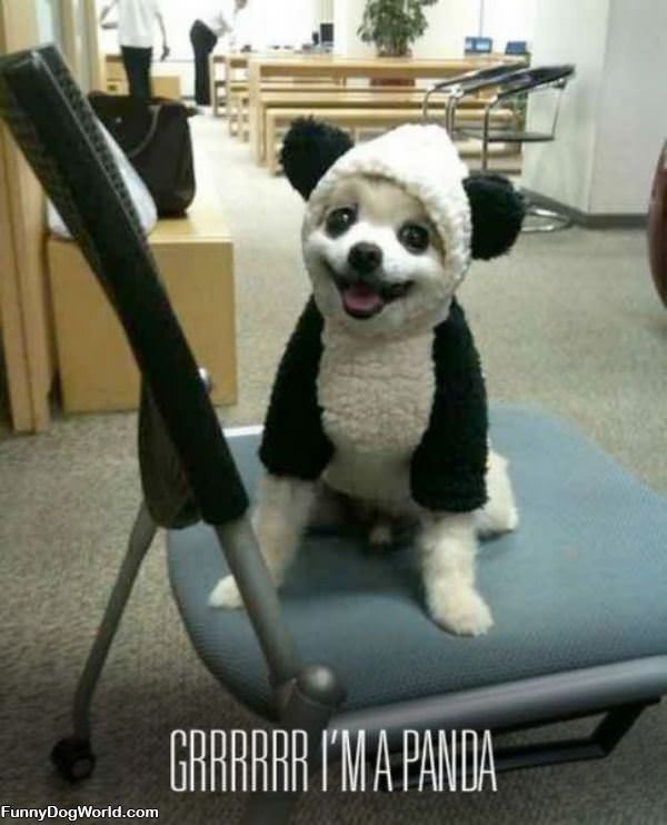 Grr Im A Panda