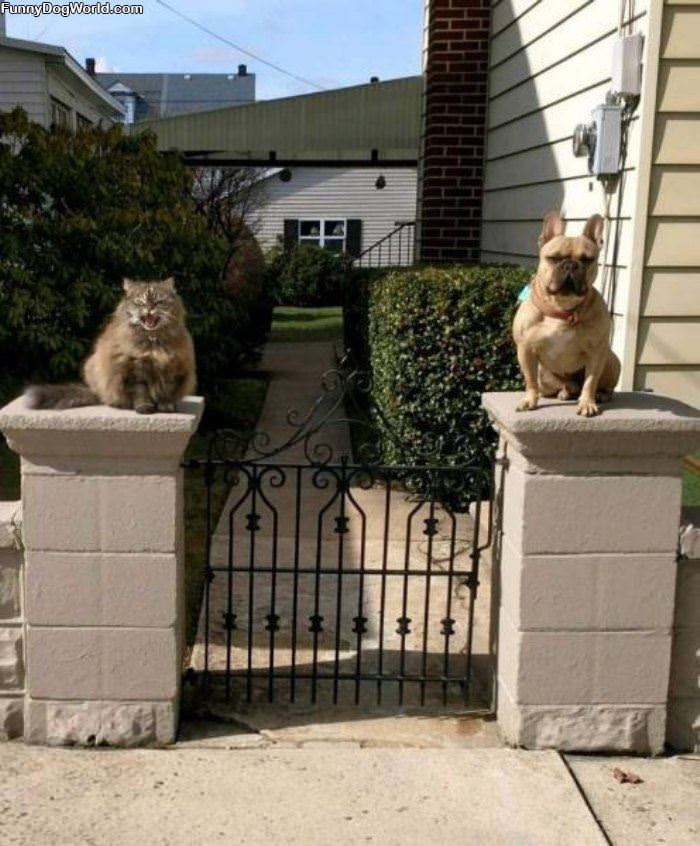 Guardians Of This Property