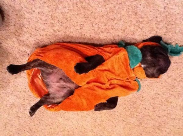 Halloween Makes Me Tired