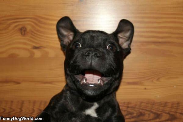Happy Dog Has Happy