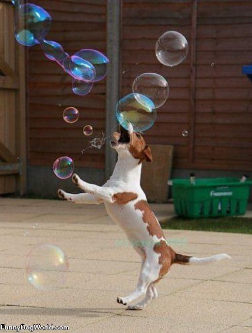 Hates Bubbles