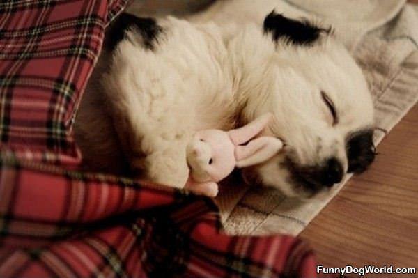 Having Sweet Dreams