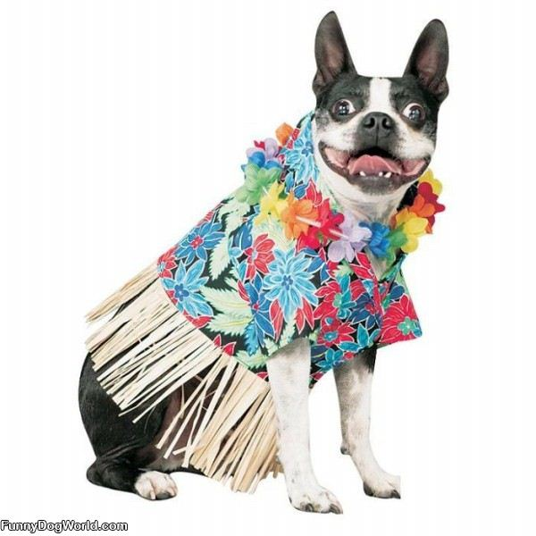 Hawaiian Dog