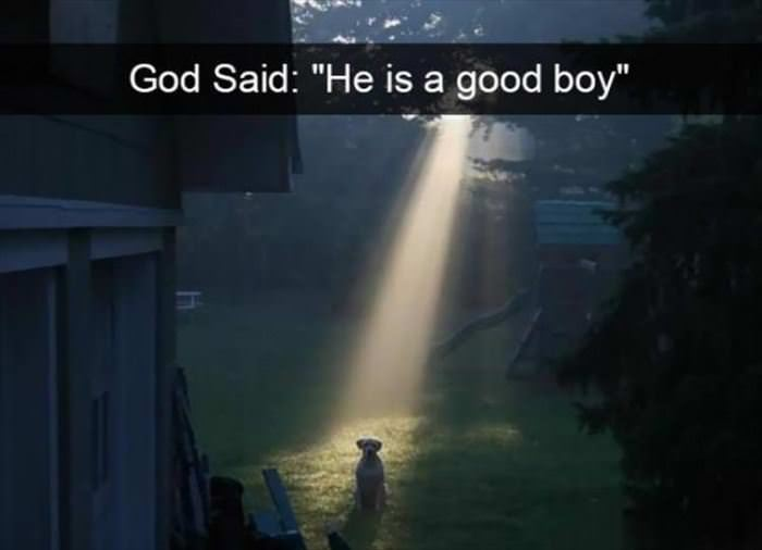 He Is A Good Boy