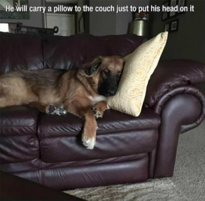 He Will Carry The Pillow Over
