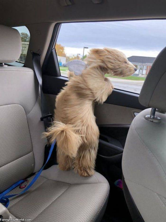 Head Out The Window