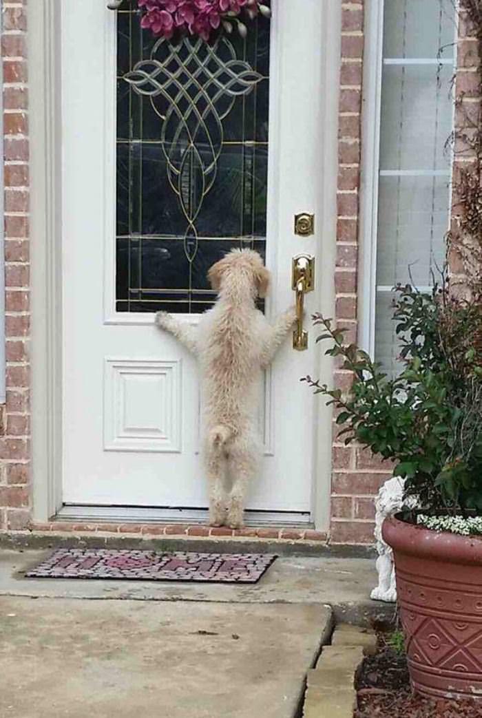 Hey Hey Let Me In