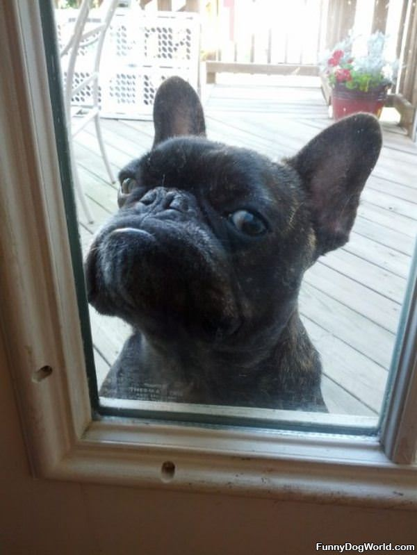 let me in now: