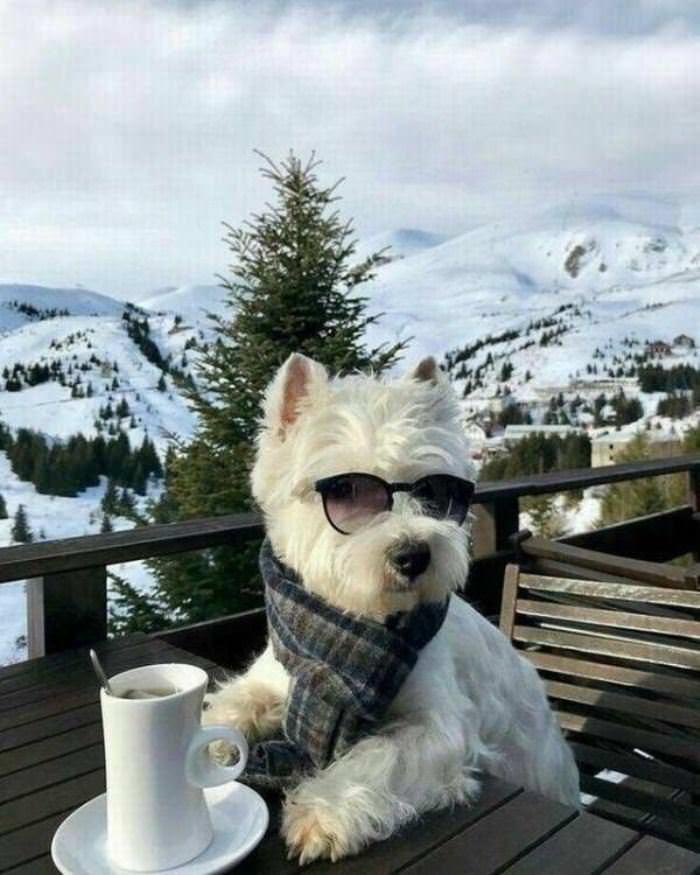 Hipster Dog Outside