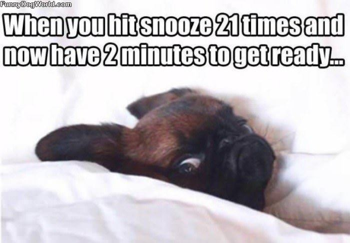 Hit Snooze Too Many Times