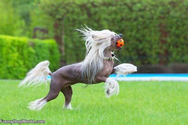 Horse Dog Detch