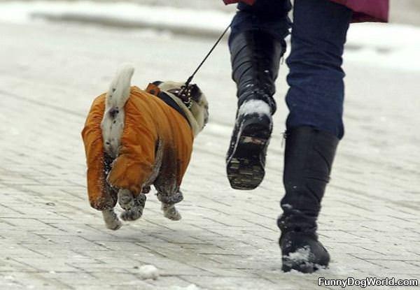 Hover Dog | Funnydogworld.com