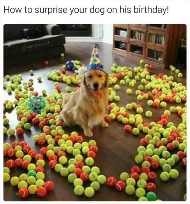 How To Surprise Your Dog