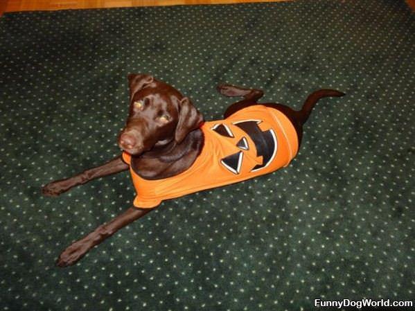 Howloween Dog