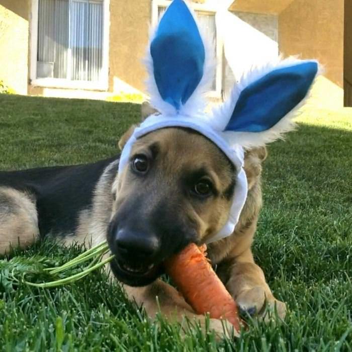 I Am A Bunny Hop Hop