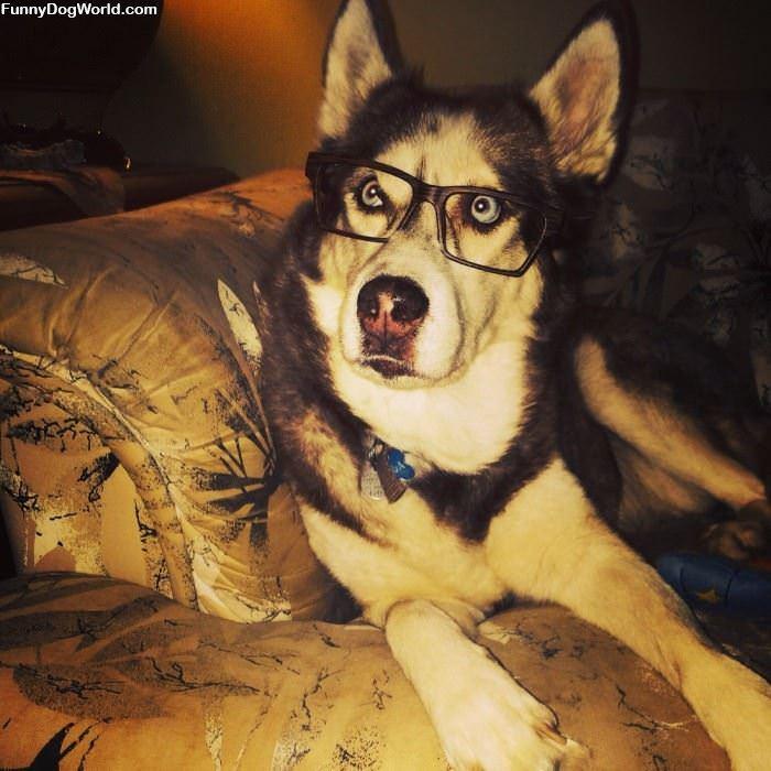 I Am A Smart Dog
