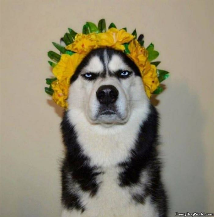 I Am A Sunflower