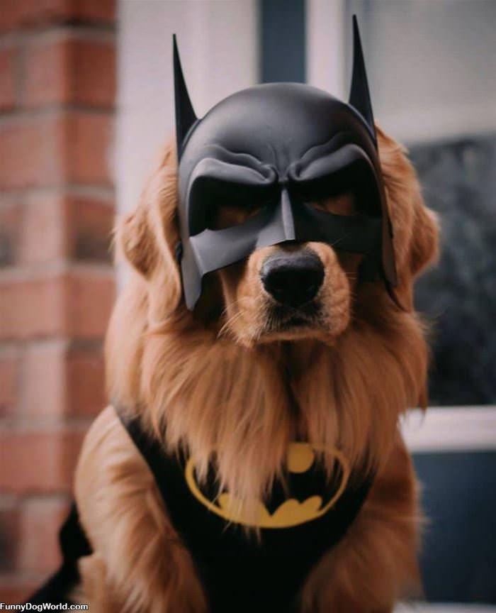 I Am Bat Dog