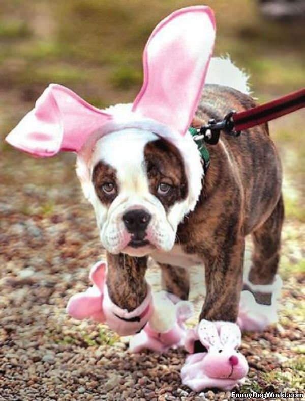 I Am Easter Bunny