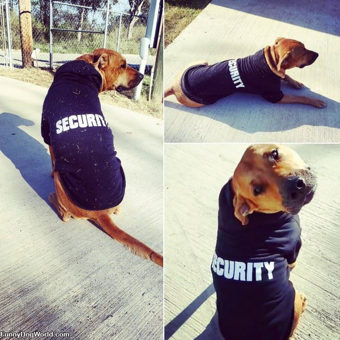 I Am Security