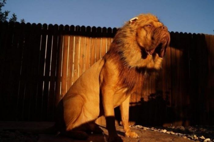 I Am The Lion Dog