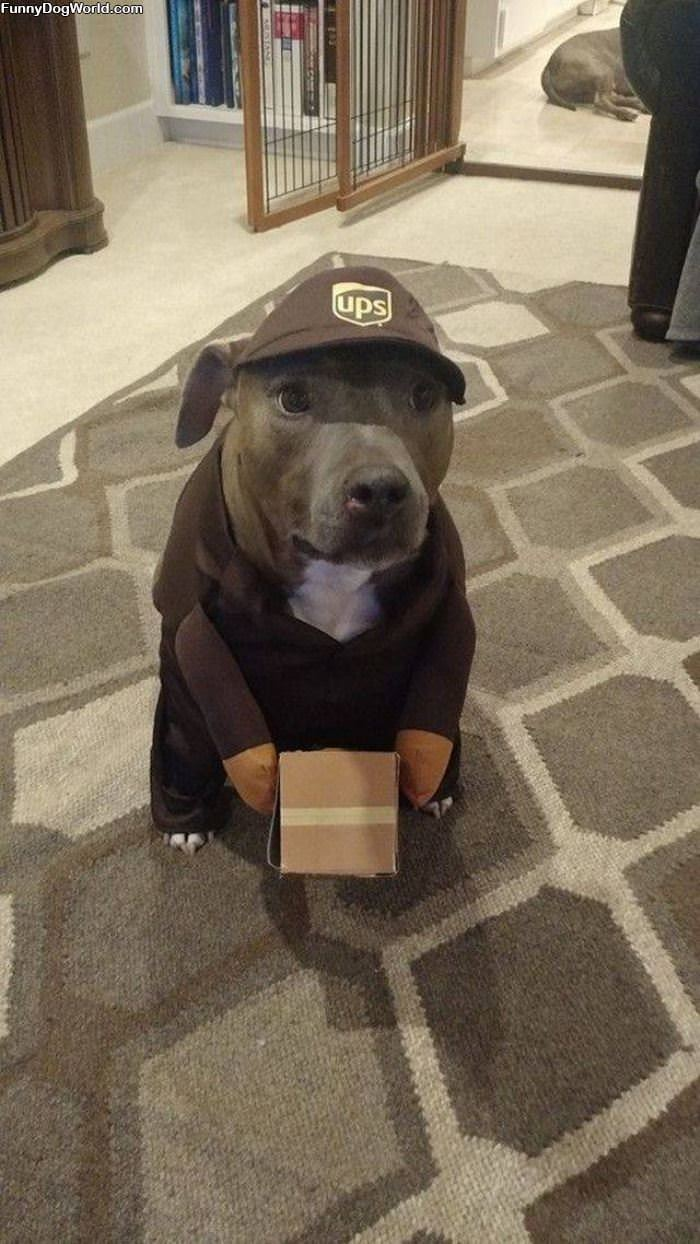 I Am The Mail Dog