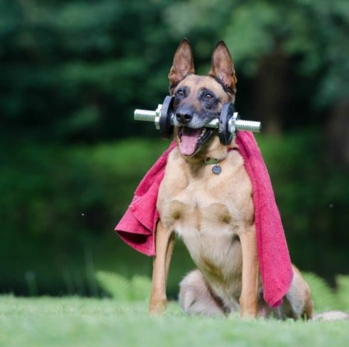I Am The Super Dog
