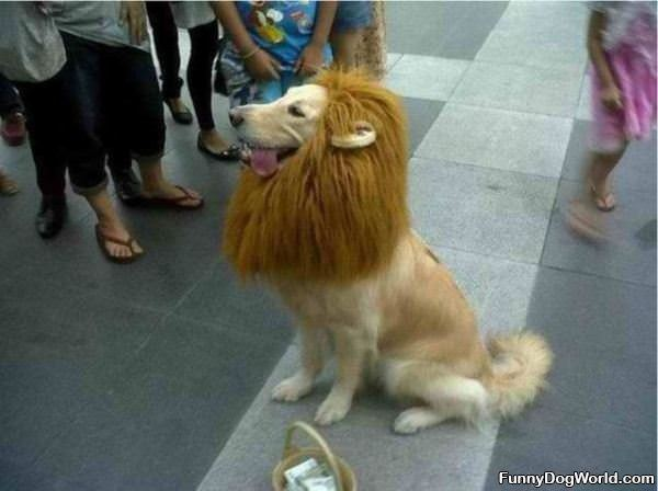 I Are A Lion