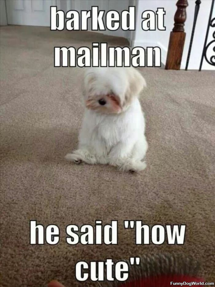 I Barked At The Mailman