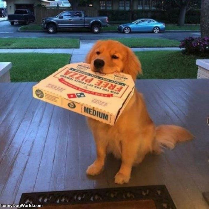 I Fetched Some Pizza