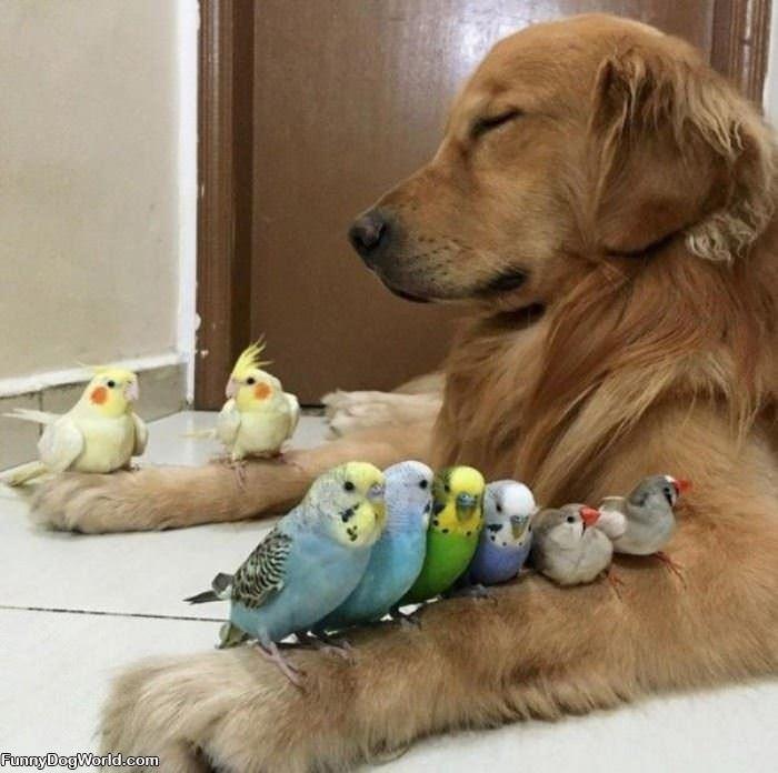 I Got All The Chicks
