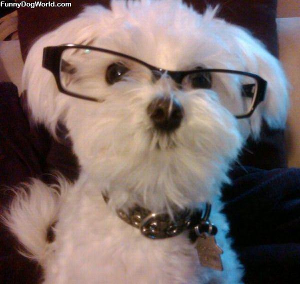 I Got My Glasses