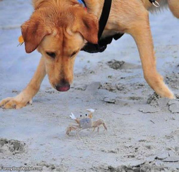 I Got U Crab
