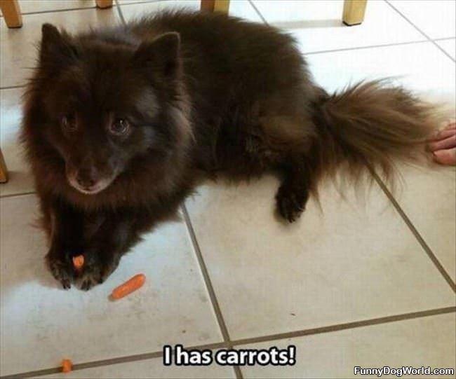 I Has Carrots