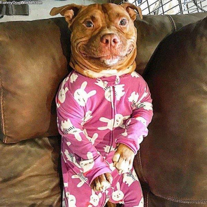 I Has Nice Pajamas