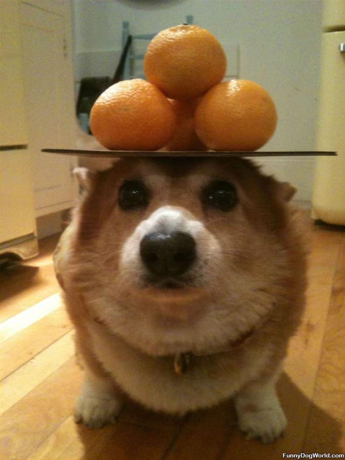 I Have Great Balance
