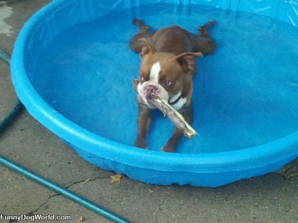 I Is In The Pool