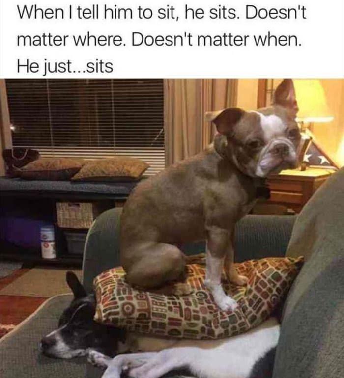I Just Sits