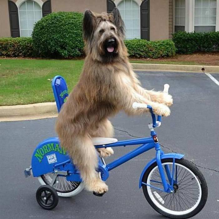 I Love Riding Bikes