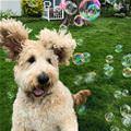 I Love Some Bubbles