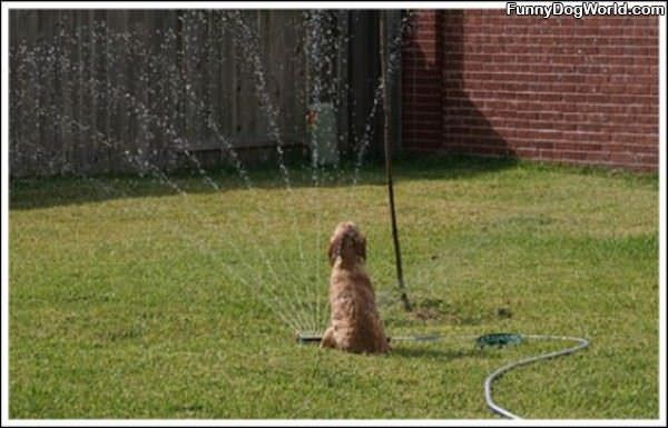 I Loves Me This Sprinkler