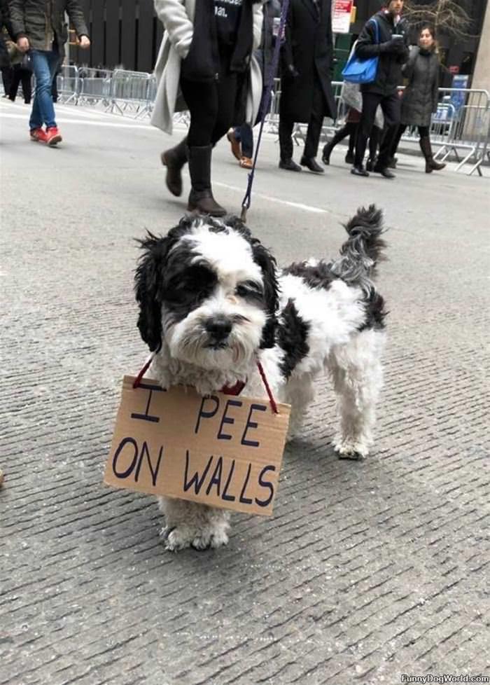 I Pee On Walls