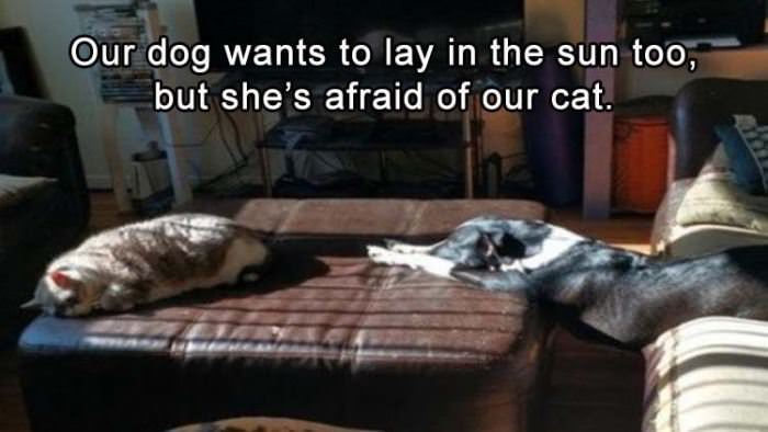I Want To Lay In The Sun Too