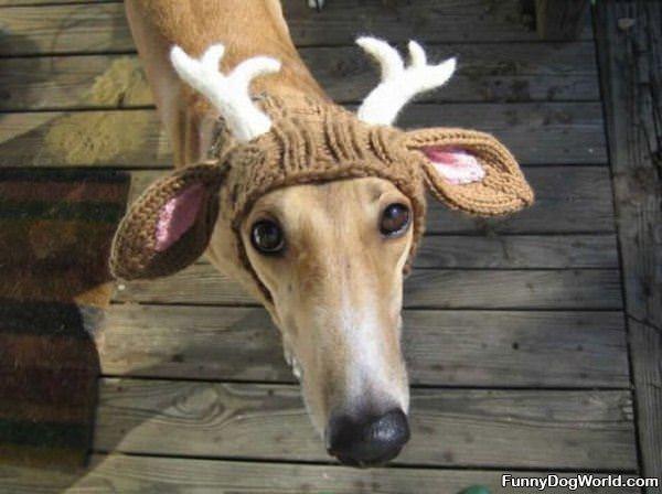 Im A Deer Lol